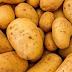 Agricultores españoles hartos de vender a pérdidas mientras el mercado está lleno de estos productos importados de Egipto y Marruecos