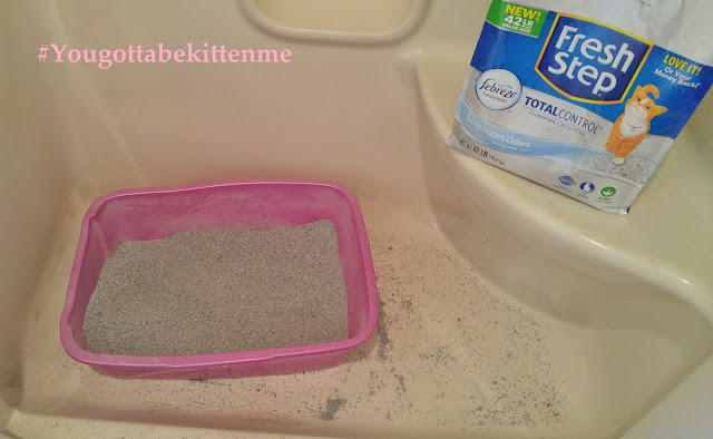 Messy litter box area #yougottabekittenme #CBias #ad