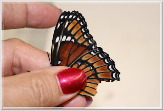 Viceroy Butterfly (Limenitis archippus) with damaged wings