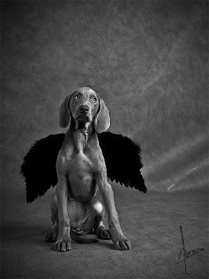 Fotografía de perro con alas