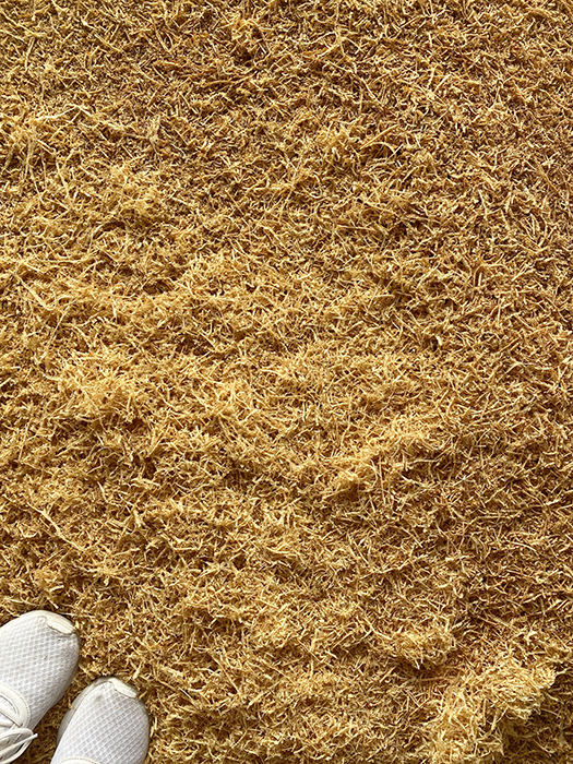 sawdust shavings from planing wood