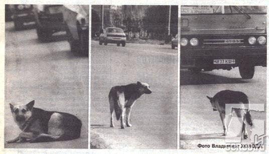 В Тольятти Пёс 7 Лет Не Покидал Место Аварии, Где Погибли Его Хозяева