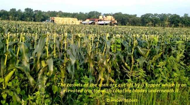 Getreideernte: Unten auf der Farm