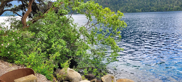 Clear water of Lake Crescent National Park