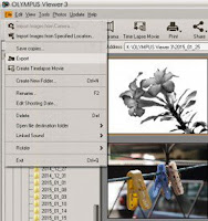Olympus Viewer 3 Exporting Images