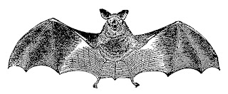 bat scary halloween spooky images illustration clipart