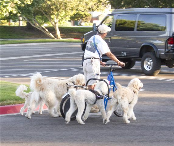Lanny-yap: Urban Dog-Mushing | Scooter And Recumbent Trike