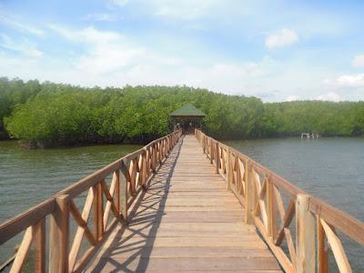 Hutan Bakau Tongke-Tongke hutan bakau tongke yang idanh di sulawesi Selatan