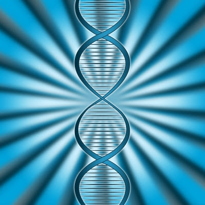 In addition to long ages, evolution requires mutations. Random ones. Studies are showing that mutations can actually be targeted, which supports biblical creation science.