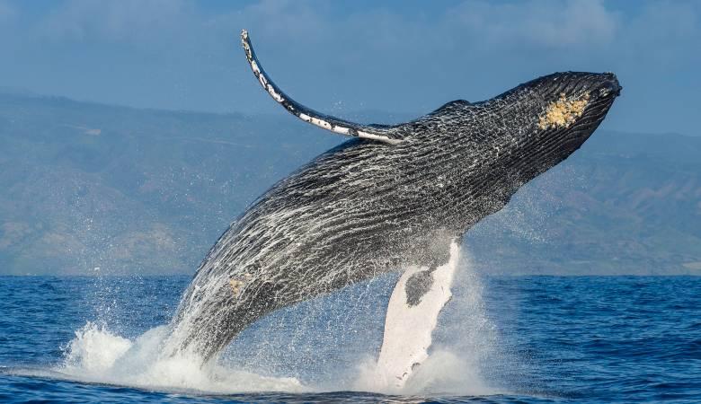 تفسير حلم رؤية الحوت في المنام لابن سيرين