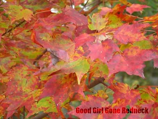 fall, autumn, colorful, seasonal, Wordless Wednesday, flashback, memories