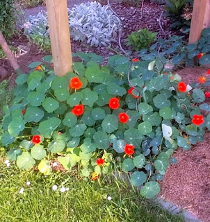 essbare Blumen von giftigen Pflanzen unterscheiden