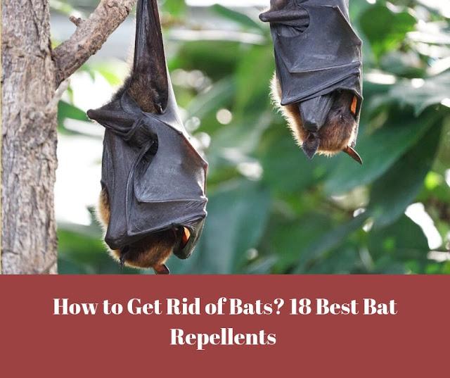 How to Get Rid of Bats? 18 Best Bat Repellents - Poster