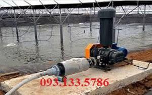 máy thổi khí heywel trong nuôi trồng thủy sản