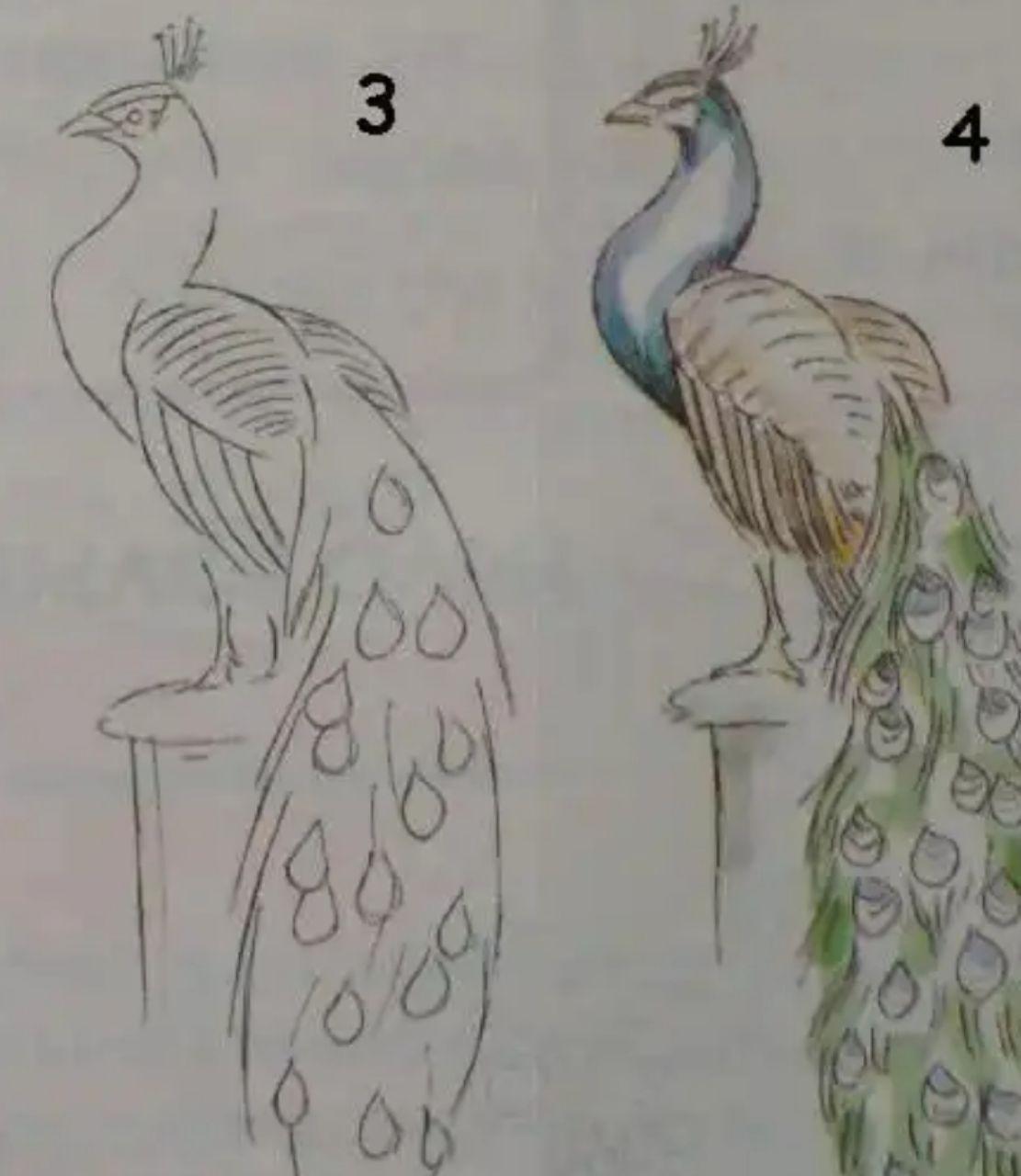 رسومات طاووس ملونه Cooknays Com