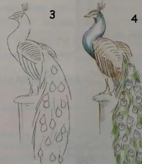 تعليم رسم طاووس للأطفال والمبتدئين بالرصاص خطوة بخطوة Drawings