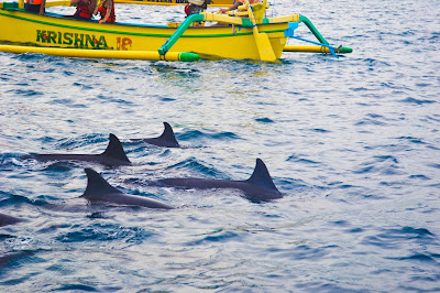 Bali, Indonesia, Holiday, Holiday In Bali, Cuti - Cuti Di Bali, Bercuti Di Bali Indonesia, Traveloka, Dolphin Di Lovina Beach Bali Indonesia, Aktiviti Snorkeling, 2018, Percutian Di Indonesia,