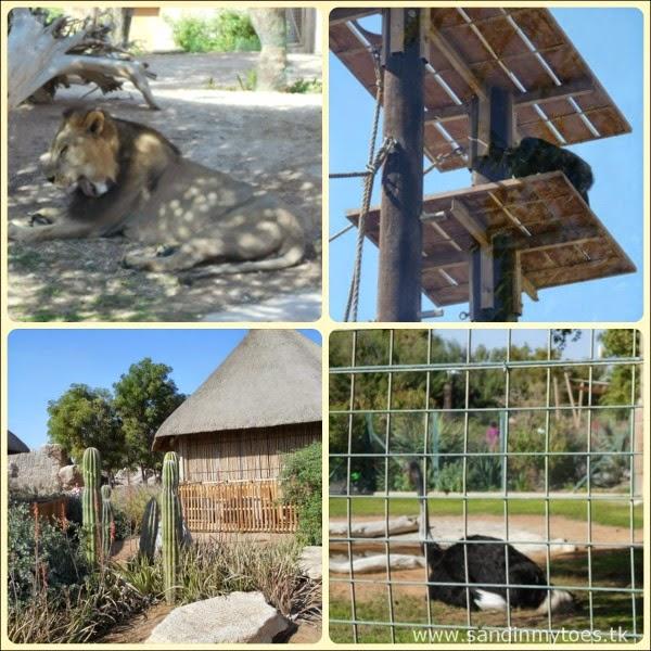 Al Ain Zoo African exhibit