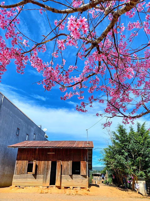 Chiêm ngưỡng vẻ đẹp tuyệt trần của vùng ngoại ô Đà Lạt 16