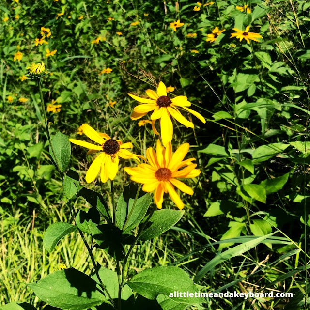Golden coneflowers inspired smiles of wonderment as we ambled through Carl R. Hansen Woods.