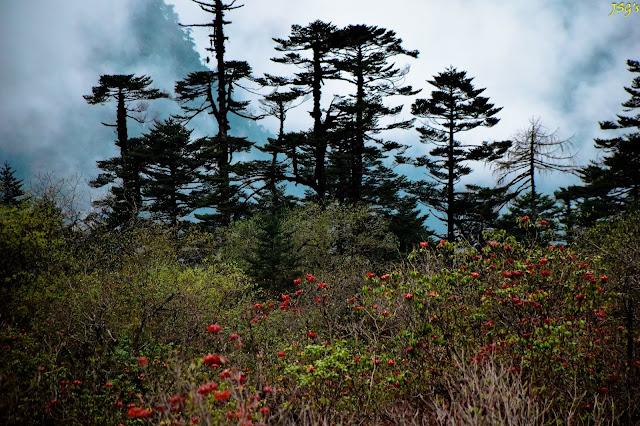 Through the Yumthang Valley Natural Reserve: Photo by Jayashree Sengupta @DoiBedouin