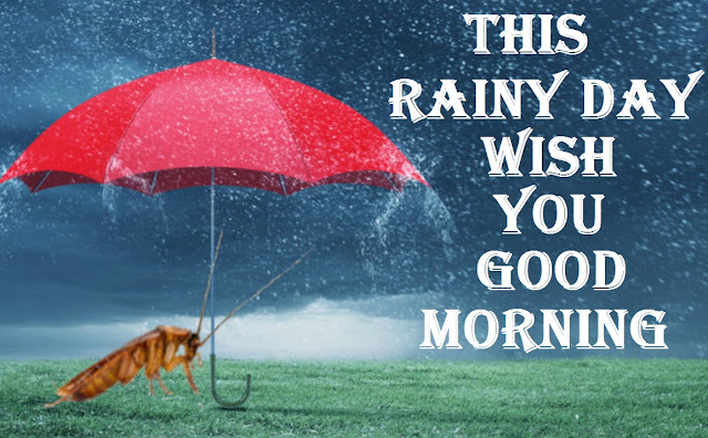Perfect Good Morning Wishes Images Quotes For Rainy Day   Good Morning Quotes, good morning, good morning message for a rainy day, good morning rainy day images, rainy good morning images hd, good morning rainy day quotes, rainy morning images with quotes, rainy good morning wishes, rainy good morning quotes, rainy good morning messages, rainy good morning gif, good morning nature rain images
