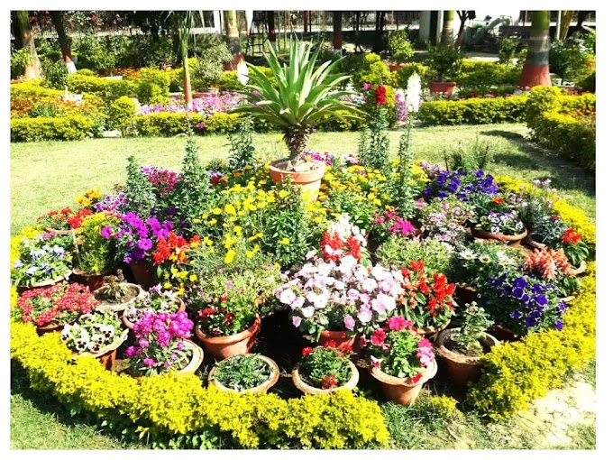 Classification of Horticultural Plants