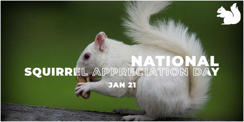 National Squirrel Appreciation Day Wishes Sweet Images