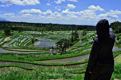Menikmati perswahan Jatiluwih Rice Terrace - Backpacker Manyar