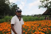 Turun Harga Namun Sepi Pembeli, Petani Gumitir Mengaku Susah Di Pemasaran