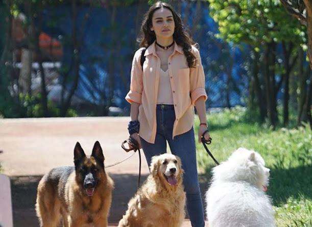 Kalp Yarası Dizisi Ayşe Gezdirdiği Köpeklerin Cinsleri