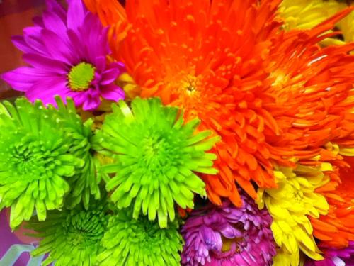 Bright Flower Wallpaper: Flowers Wallpapers