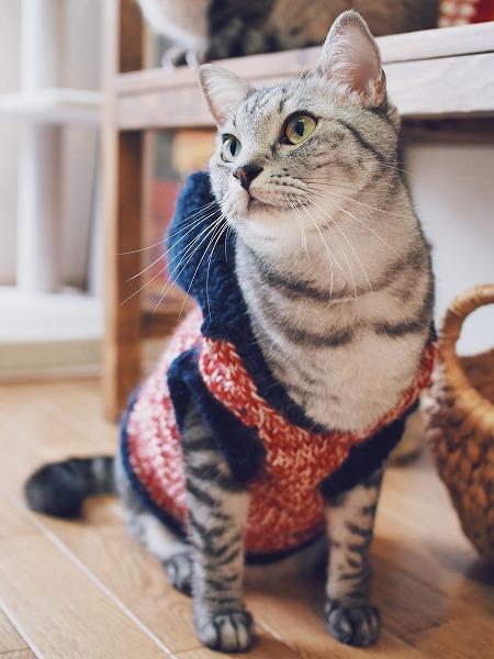 ファッションモデルみたい