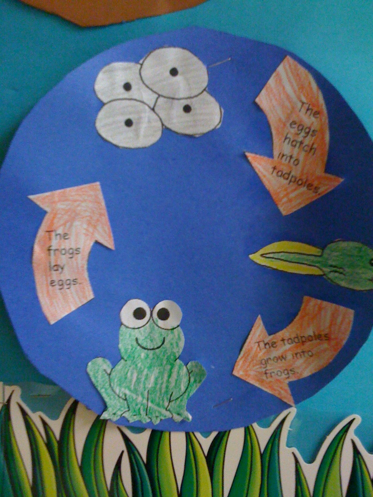Bishop's Blackboard: An Elementary Education Blog: Frog Facts