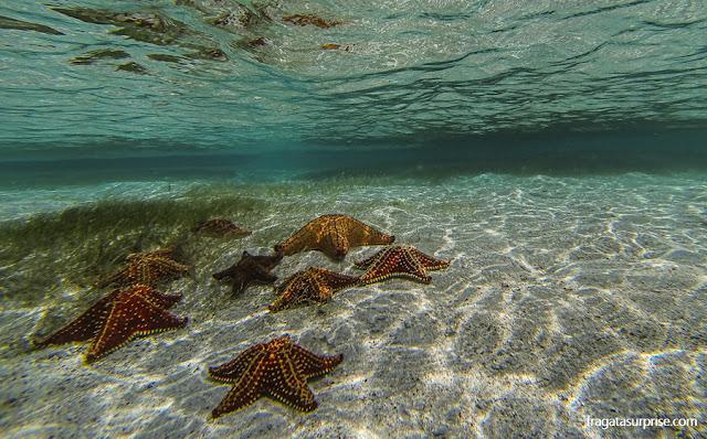 Estrelas do mar em um banco de areia no Arquipélago de San Blas