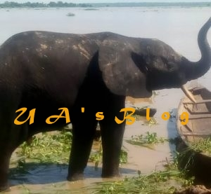 Stray elephants overrun Kebbi village