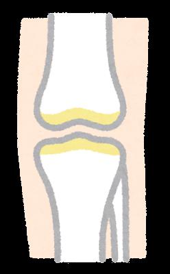 軟骨のイラスト