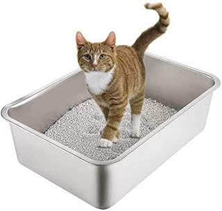 Menyiapkan bak pasir kucing