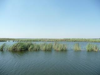 Река Волчья возле Васильковки Днепропетровской области