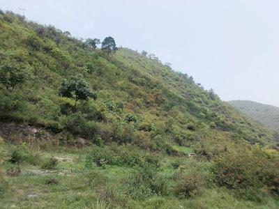 Agriculture Land 1200Nali Kabarasakara,  Satpuli Road, Uttarakhand