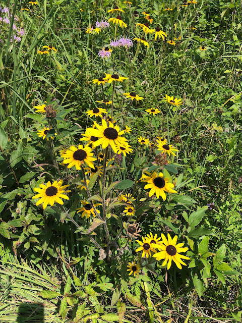 Summer prairie flowers treated us to brilliant blooms and butterflies!