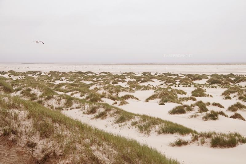 Amrum Aussichtsdüne Ausblick Nordsee Strand