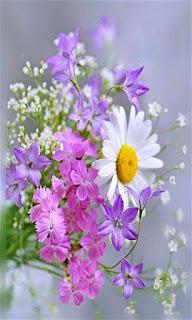 Flores margarita blanca con amarillo y lilas fondos wallpaper para teléfono móvil resolución 480x800