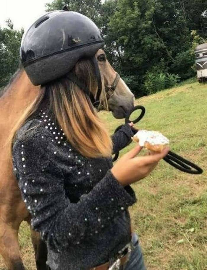 A horse in a helmet.
