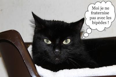 Chatte noire au regard incendiaire.