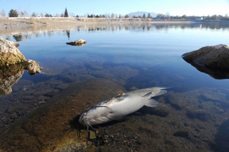 Okyanuslarda yaşayan birçok balık açlıktan ölecektir.