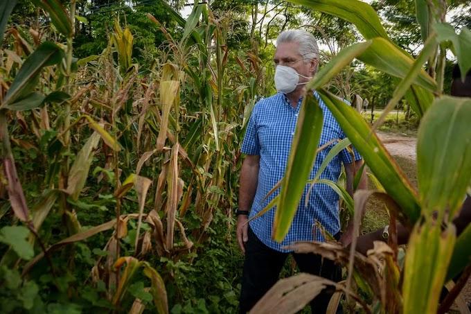 Comenzó el rodaje de la doceava parte de Los niños de maíz