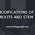 Modifications of roots and stems