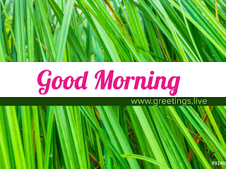 good morning greeting cards with green grass background
