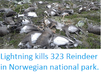 https://sciencythoughts.blogspot.com/2016/08/lightning-kills-323-reindeer-in.html